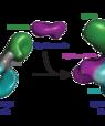 Den første tredimensionelle struktur af IgE antistoffet, som udløser allergiske reaktioner. Til venstre ses de eksperimentelle data opnået ved hjælp af elektromikroskopi, som førte til den tredimensionelle struktur af IgE. Til højre de tilsvarende eksperi